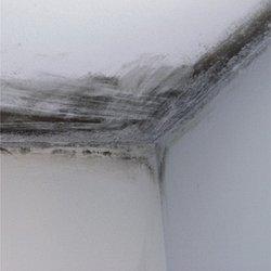 schimmel in der wohnung entfernen und vermeiden schimmel. Black Bedroom Furniture Sets. Home Design Ideas